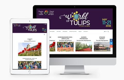Tulip_Festival_Portfolio
